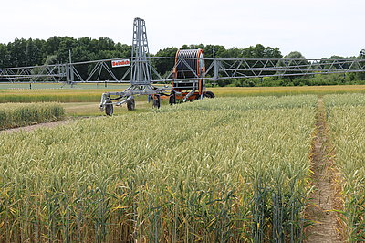 Irrigation system for field crops in Marquardt (Photo: ATB)