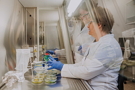 Sterile bench in the microbiomics laboratory (Photo: Manuel Gutjahr)